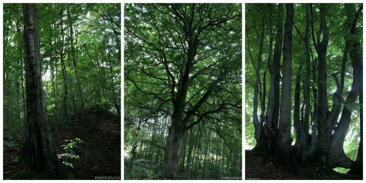 treetriptych