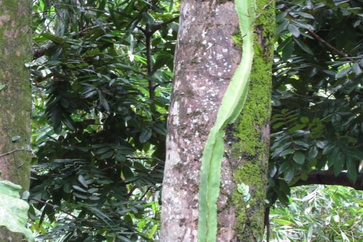 Cocom Pech_foto serpiente vegetal