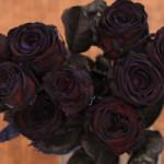 rose-nere-stelo-alto-2-300x200